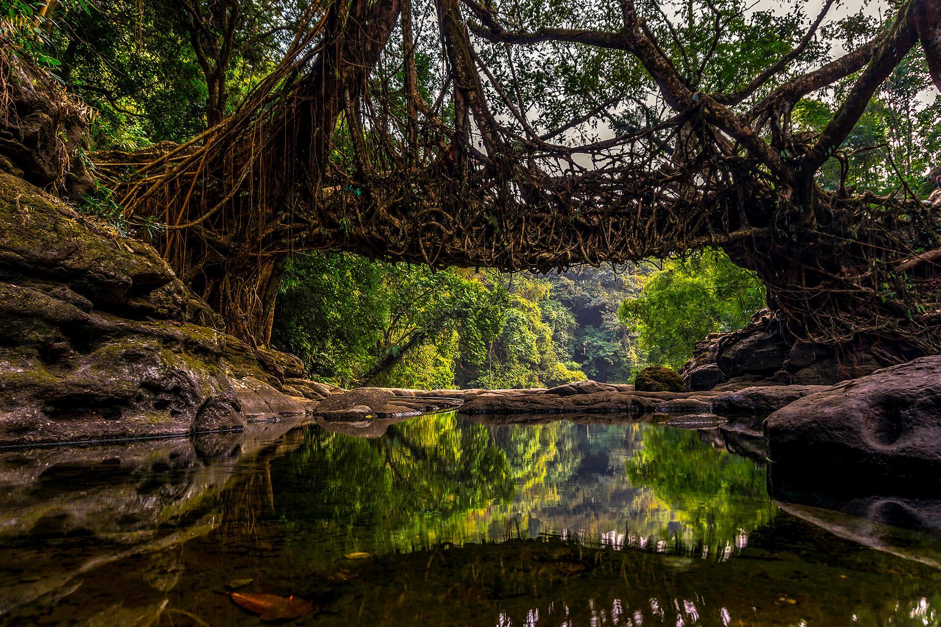 Nohwet Living Root Bridge near Mawlynnong