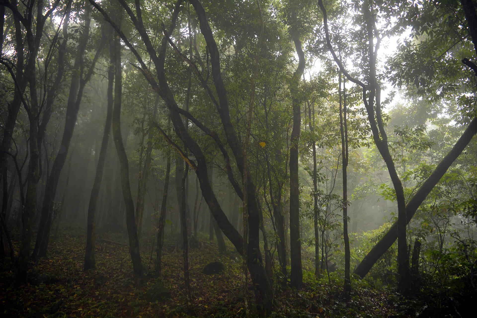 Nokrek Reserve